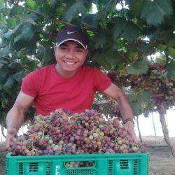 Câu chuyện về người Việt thành công trên đất Úc nhờ farm & buôn bán ở chợ