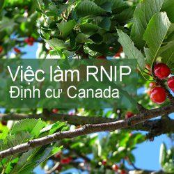 Việc làm định cư Canada RNIP – Công nhân nông trại tại British Columbia