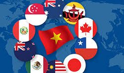 CPTPP giúp sản phẩm của bạn cạnh tranh trong thị trường Châu Á - Thái Bình Dương như thế nào?