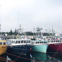 Việc làm tại Canada ngành tàu biển, định cư theo chương trình AIPP